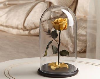 glass dome light etsy. Black Bedroom Furniture Sets. Home Design Ideas