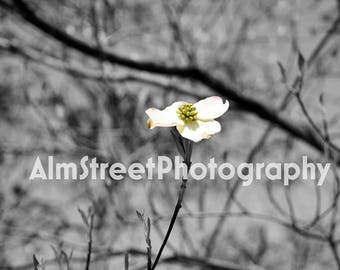 Flower, Nature, Black and White, Wall Art