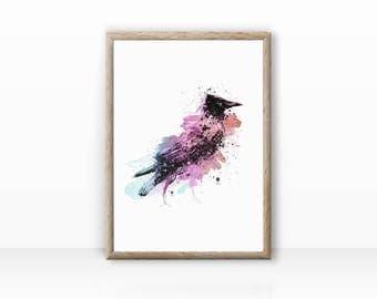 Magpie bird illustration