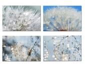 Cards postcards nature dandelion - set of 4 cards postcards nature macro - framing - home - organic cards photo