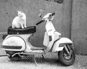 Cat on a Vespa