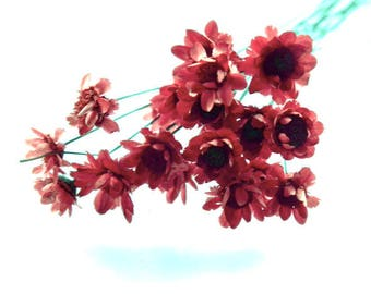 X 1 pretty mini Daisy red 0.8 cm