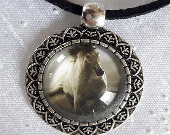 Black velvet collar and Medallion horse no. 2
