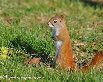 5 photographs of animals: deer, squirrel, birds...