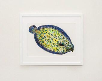 Peacock Flounder Illustration Print