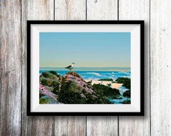 Ocean Photography, Digital Download, Bird Photo, Gull, Rocks, Chile, Printable Wall Art, Home Decor, Summer Decor, Beach Decor, travel print
