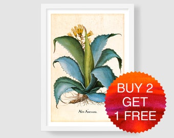 Antique Botanical Aloe Americana Art, Vintage Botanical Aloe Illustration, Aloe Wall Art, Aloe Art Print, Besler Botanical, Home Wall Decor