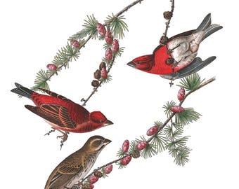Audubon's Plate 4 Purple Finches Cross Stitch Pattern
