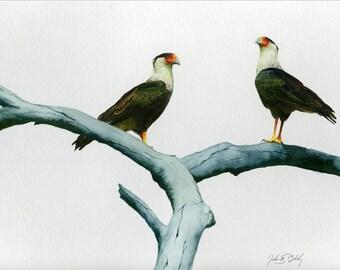 Crested Caracara Watercolor print