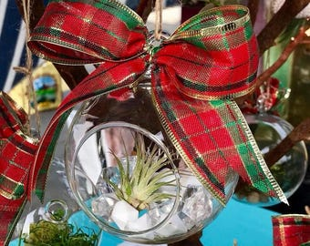 Holiday Air Plant Ornament
