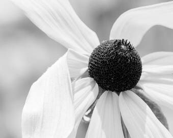 Painterly Black and White Sunflower Photograph Digital Download