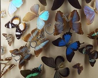 Butterfly Wall 2