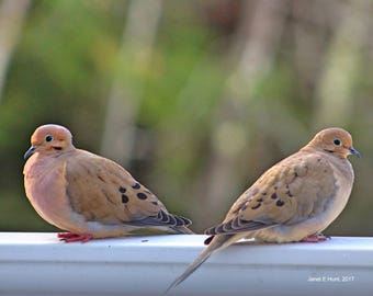 Two Doves 8x10 Photo Gift Ideas