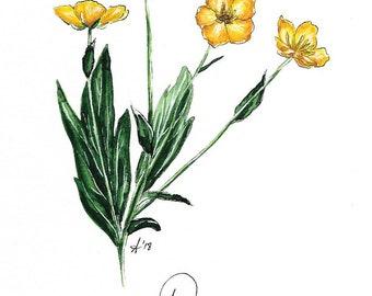 "Original Buttercup Flower Watercolor ""Mantra Flora"" Print"