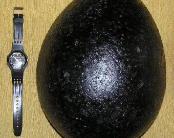 "Black ""Telor Jagad"" Pearls ---""Seed of Mother Earth."""