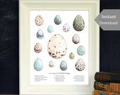 Wild Bird Eggs - Nature Collection - Educational Printable -  A4 and 8x10 - Wild + Free, School Room Wall Art