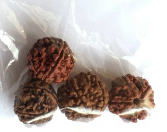 Rudraksha 20mm Bag of Four Beads