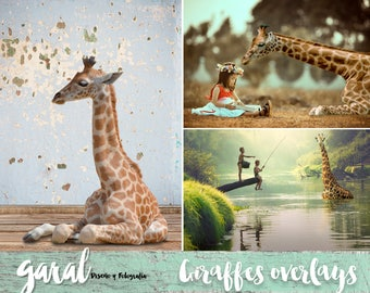 Giraffes Photoshop Overlays, 12 giraffes overlay, nature, animals, PNG files, photoshop overlay. african animals, giraffe