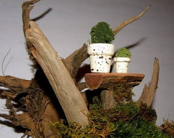 """Save25% 3-1"""" Splattered Spring Miniature Flower pots filled with Lichens-Set of 3 pots in the larger size seen here"""