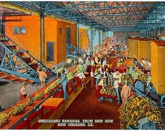 Vintage New Orleans Postcard - Unloading Bananas (Unused)