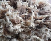 Whole Raw Unwashed Shetland Lamb's Fleece - Pumpkin - 6.5 lbs Soft Organic Wool Great for Hand Spinning Oatmeal and Brown