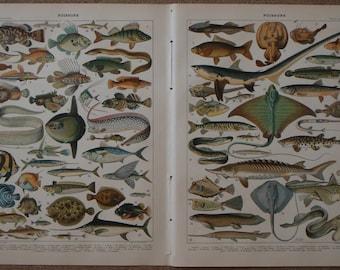 PAIR of Antique BOOK Illustrations of Fish by Adolphe Millot from Nouveau Larousse Illustré (1897-1904)