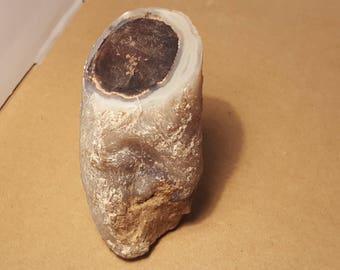Beautiful Polished Petrified Wood specimen