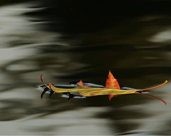 Floating Autumn Leaf photo,  Afloat.  Wall decor, home decor, Nature decor