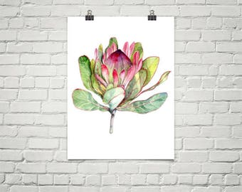Pink Protea Flower -  Large 12''x16'' Botanica Art Print Watercolor Painting - Flower Art Wall Decor