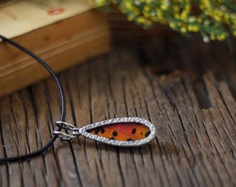 Real butterfly wing necklace Entomology gift Butterfly necklace Insect real New girlfriend gift Wife gift necklace Butterfly taxidermy