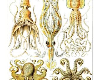 Ernst Haeckel's Vintage Artwork Gamochonia