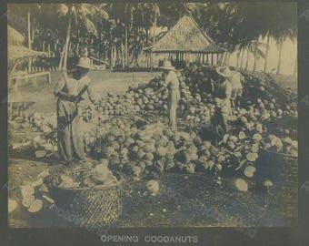 Philippines peasant men with coconuts antique photo