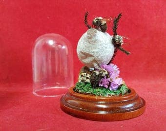 Taxidermy Bumble Bees and a bee hive Glass Dome Display-entomology-wasp-bee