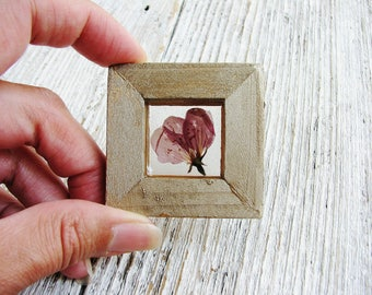 Crab Apple Flower Art Magnet, Real Plant Art, Framed Botanical Art, Magnet Art, Nature Lovers, Minimalist Decor, Garden Gift