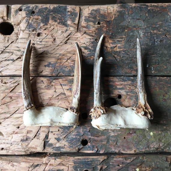 Pair of Roe Deer Antlers, Small Deer Antler Mounts, Farmhouse Antler Decor