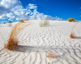 White Sands Photography Print - Picture of Colorful Plant Life and Sandy Textures in New Mexico Desert Fine Art Home Decor 4x6 to 30x45