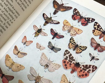 A pocket book of British Moths by George E. Hyde