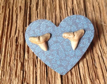 Fossil sharks teeth post earrings: Extinct requiem shark fossil tooth earrings, fossil jewelry, shark earrings, fossil earrings, sharks
