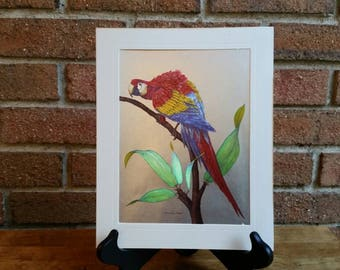 Vintage Parrot Metal Etching by Richard J. Smith, Bird Print Made in England