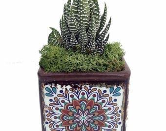 """Moroccan Rosette Planter + Live Succulent Plant - Sunburst Flower - 3"""" x 3"""" x 5"""""""