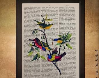 SALE-SHIPS Aug 22- Painted Finch Dictionary Art Print Audubon Bird Wall Art Fine Art Print Home Songbird Decor Gift Ideas da645
