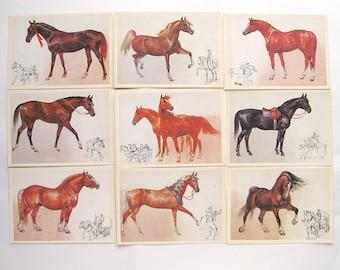 Breeds of horses, Set of 16 Soviet Unused Postcards, Animal, Russian, Illustration, Glukharev, USSR, 1987