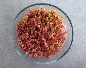 Fresh Live Red Sphagnum Moss! Quart and Gallon Bags (For Terrariums, Fairy Gardens)
