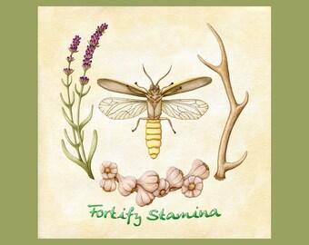 Fortify Stamina - Digital Download - Elder Scrolls Alchemy - Botanical Scientific Illustration - Skyrim