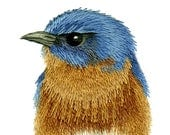Hand Embroidery Kit - Eastern Blue Bird on Pine Branch Needle Painting Embroidery - Embroidery Art Picture