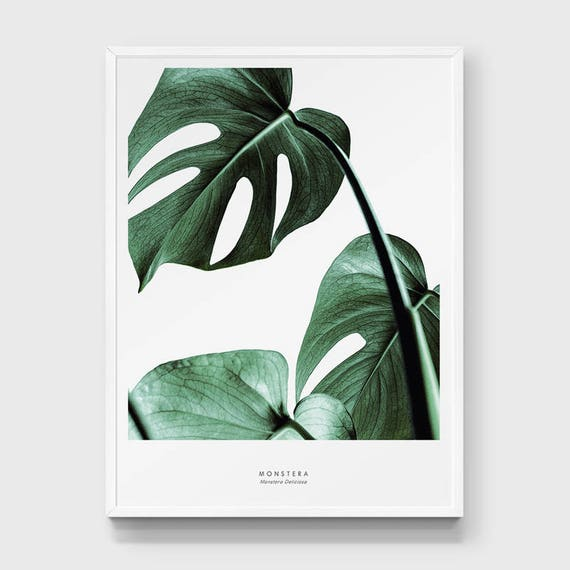 Watercolor Green Plants Monstera Nature Posters And Prints: Monstera Print. Cheese Plant Leaf Poster. Tropical Leaf