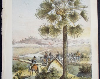 1856 Chamaerops Humilis, European Fan Palm or Mediterranean Dwarf Palm. Antique Lithograph by Vincent Brooks. Original. Natural History.