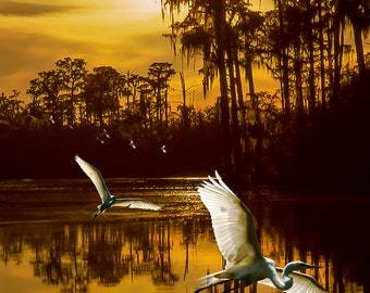 Two Egrets in the Okeefenokee