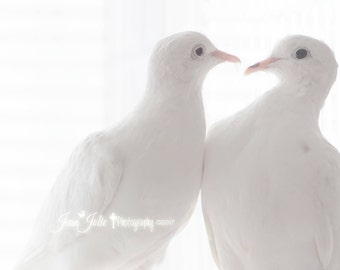 religious gallery canvas bird photograph dove white nature photography holy spirit peace bird bird photo fine art photograph God's Promise