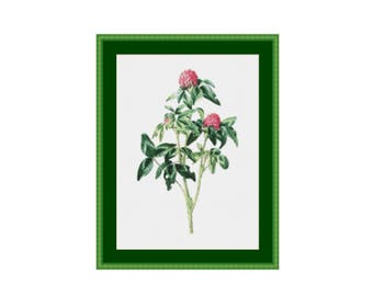 Red Clover Counted Cross Stitch Pattern / Chart, Instant Digital Download  (AP218)